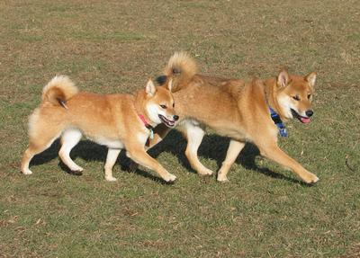http://www.illovich.com/yoshi/pages/twins-thumb.JPG